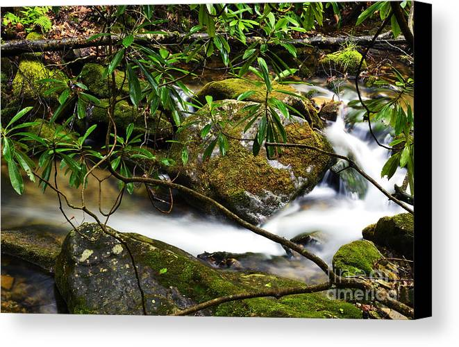 Rushing Mountain Stream Canvas Print featuring the photograph Rhododendron And Waterfall by Thomas R Fletcher