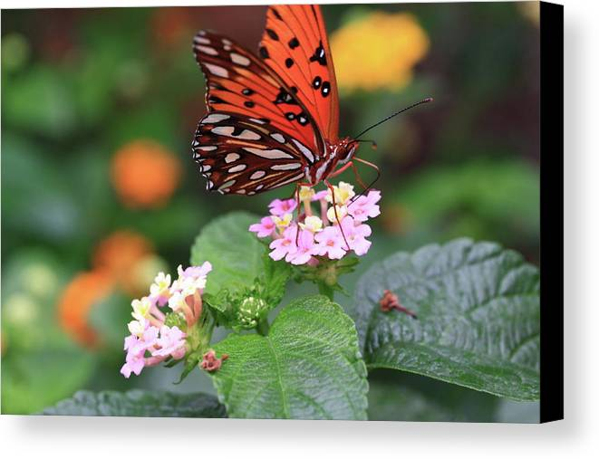 Butterfly Canvas Print featuring the photograph Untitled by Rick Berk