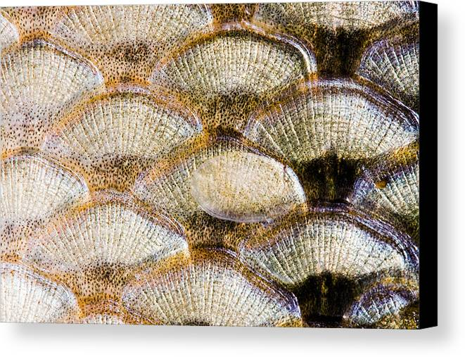 Abstract Canvas Print featuring the photograph Fish Scales Background by Odon Czintos
