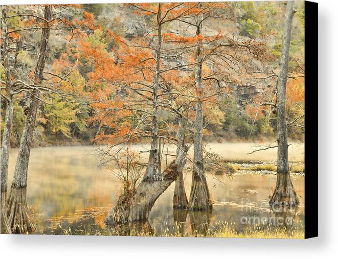 Landscape Canvas Print featuring the photograph Cypress Trees In The Mist by Iris Greenwell