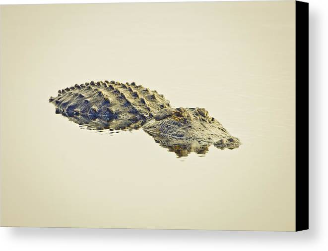 Alligator Canvas Print featuring the photograph Alligator Untitled by Patrick M Lynch