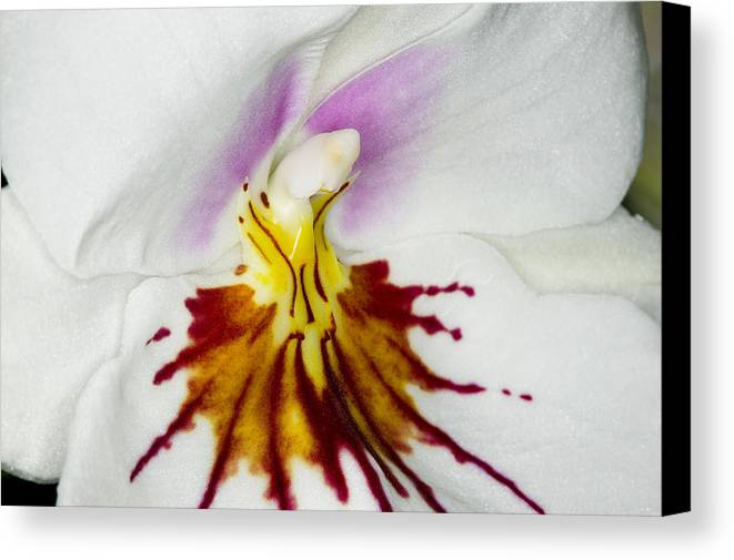 Orchid Canvas Print featuring the photograph Exotic Orchids Of C Ribet by C Ribet