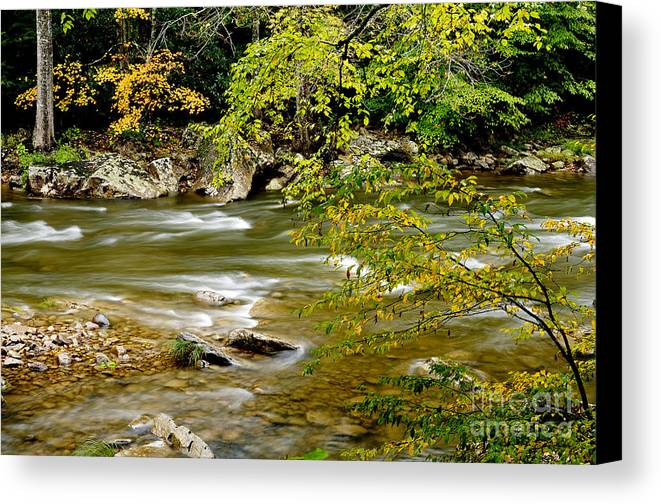 West Virginia Canvas Print featuring the photograph Fall Along Williams River by Thomas R Fletcher