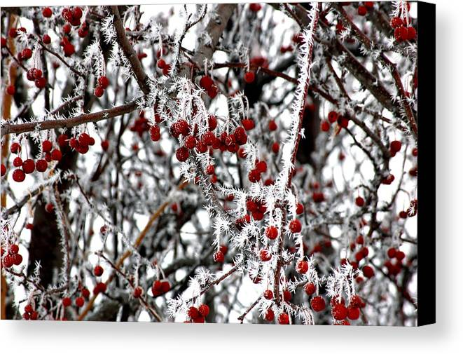 Landscapes Canvas Print featuring the photograph A Frosty Morning. by Randall Templeton