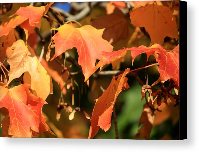 Glimpse Canvas Print featuring the photograph A Glimpse Of Autumn Color by Julia Mayo