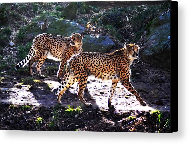 A Pair Of Cheetah's Canvas Print featuring the photograph A Pair Of Cheetah's by Bill Cannon