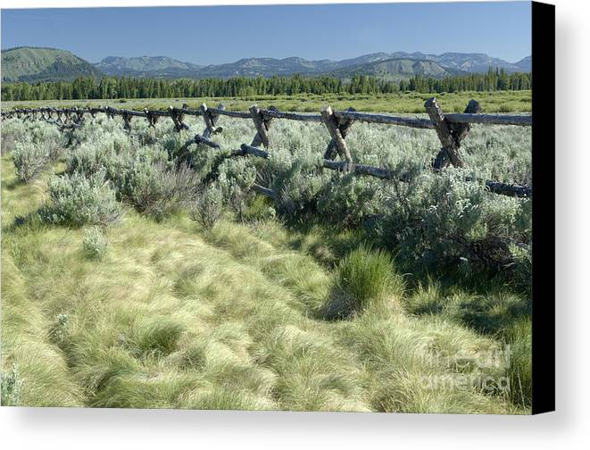 Grand Teton National Park Canvas Print featuring the photograph Along The Fence by Sandra Bronstein