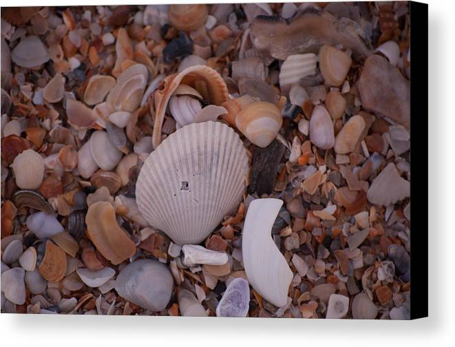 Canvas Print featuring the photograph Amelia Island by Alan Grodin