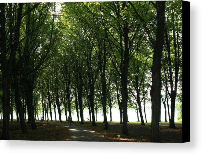 Park Canvas Print featuring the photograph Amsterdam Bos by Theresa Ferron
