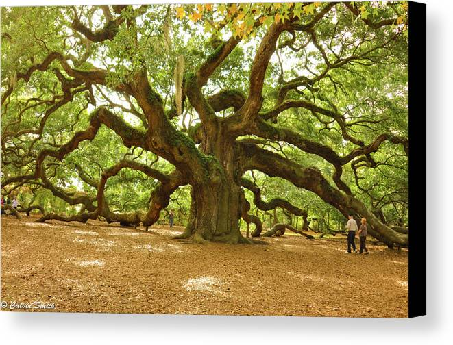 Canvas Print featuring the photograph Angel Oak by Calvin Smith