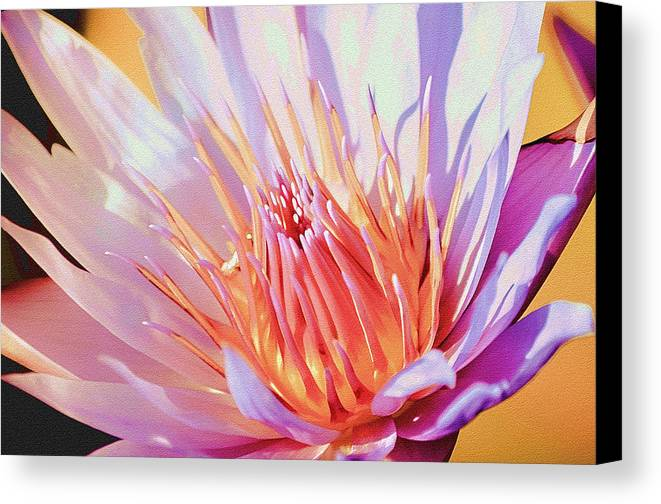 Water Lily Canvas Print featuring the photograph Aquatic Bloom by Julie Palencia
