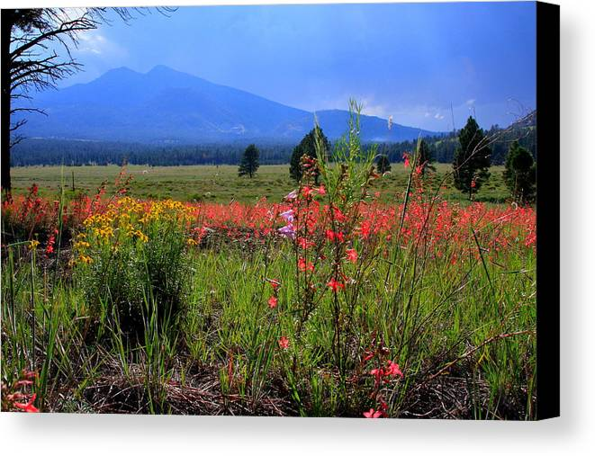 Wildflowers Canvas Print featuring the photograph Arizona Wildflowers by Robert Sirignano