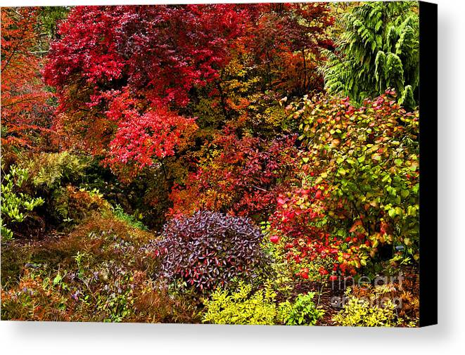 Asticou Canvas Print featuring the photograph Autumn Fusion by John Greim