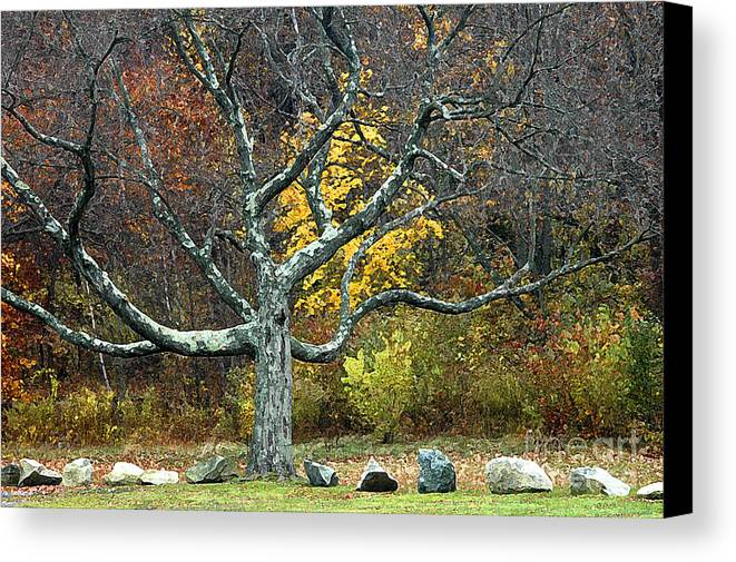Photo Canvas Print featuring the photograph Autumn Grandfather Tree 2 by Mike Nellums