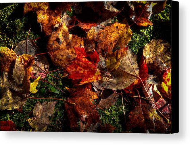 Autumn Canvas Print featuring the photograph Autumn Leaves On The Moss by David Patterson