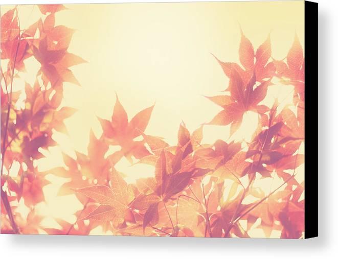 Autumn Canvas Print featuring the photograph Autumn Sky by Amy Tyler