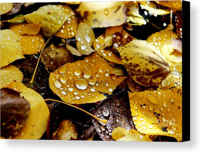 Wyoming Canvas Print featuring the photograph Autumn Tears by Wesley Hahn