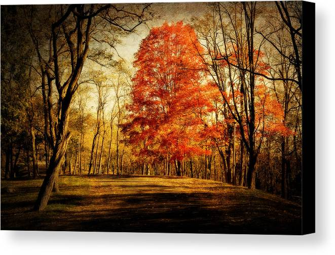 Fall Canvas Print featuring the photograph Autumn Trail by Kathy Jennings