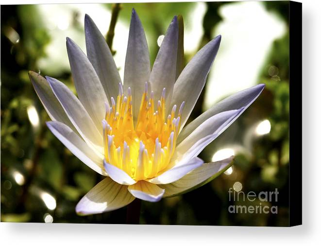 Lily Canvas Print featuring the photograph Awaken The Spirit by Pamela Gail Torres