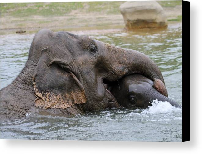 Elephant Canvas Print featuring the photograph Baby Love by Lisa Smith