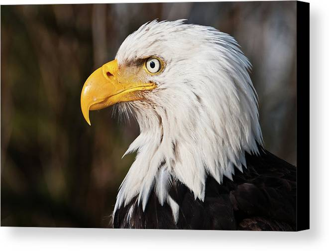 Horizontal Canvas Print featuring the photograph Bald Eagle by Chad Graham