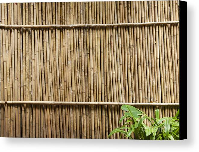 Architectural Detail Canvas Print featuring the photograph Bamboo Fence by Don Mason