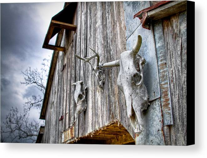 Cow Canvas Print featuring the photograph Barnstorm by Pixel Perfect by Michael Moore