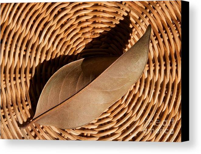 Brown Canvas Print featuring the photograph Basket Of Brown by Dan Holm