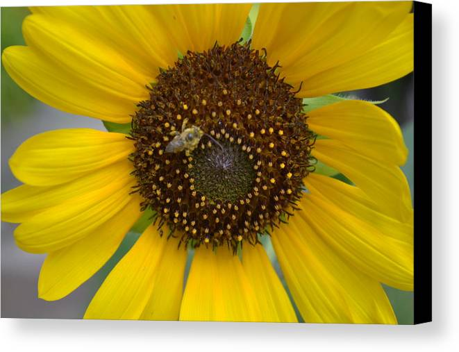 Flowers Canvas Print featuring the photograph Bee A Worker by Monica Lyons