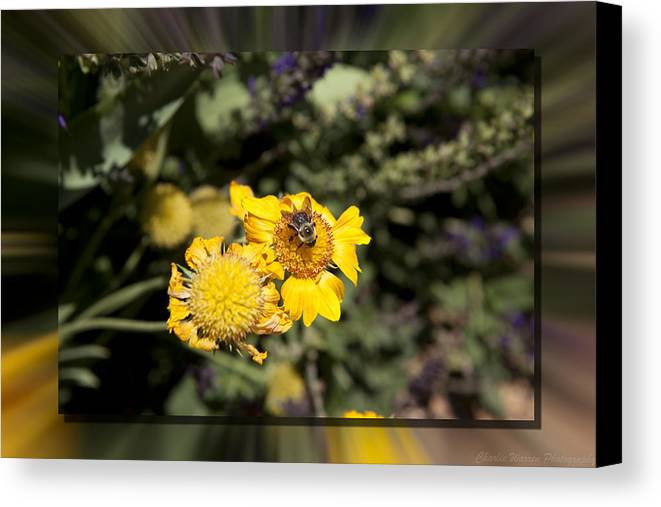Flower Canvas Print featuring the photograph Behave by Charles Warren