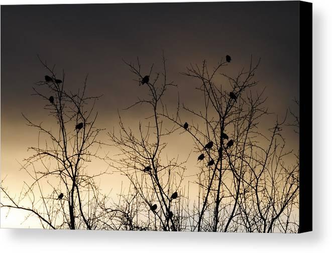 Black Birds Canvas Print featuring the photograph Bird Cove by Wanda Brandon