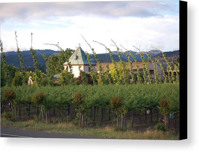 Blowing Grape Vines Vineyards Rustic House Winery Napa California Ca Wine Canvas Print featuring the photograph Blowing Grape Vines by Holly Blunkall