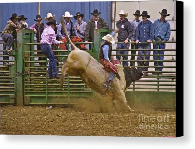 Photography Canvas Print featuring the photograph Bull Rider 2 by Sean Griffin