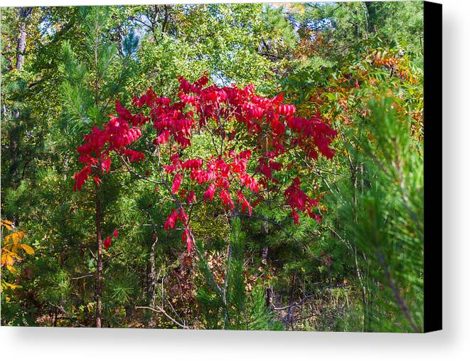 Red Leaves Canvas Print featuring the photograph Burning Leaves by Leroy McLaughlin