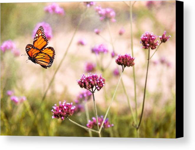 Monarch Canvas Print featuring the photograph Butterfly - Monarach - The Sweet Life by Mike Savad