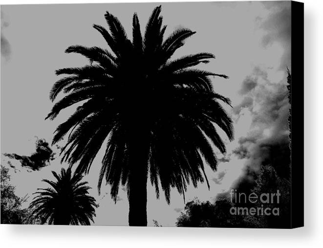 Palm Trees Canvas Print featuring the photograph California Dreamin by Allen Sindlinger