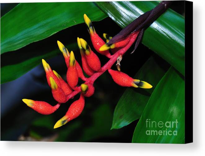 Photography Canvas Print featuring the photograph Cascading Color by Kaye Menner