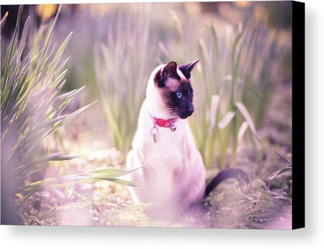 Horizontal Canvas Print featuring the photograph Cat Sitting By Daffodils by Sasha Bell
