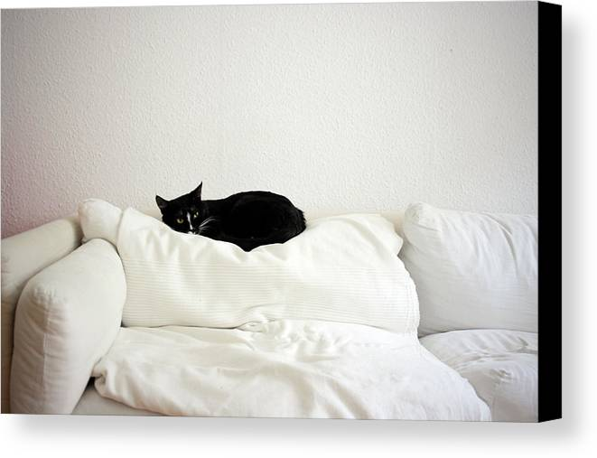 Horizontal Canvas Print featuring the photograph Catheaven by Licensed Material
