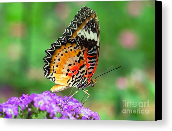 Lacewing Butterfly Canvas Print featuring the photograph Colorful Wing by Cheryl Cencich