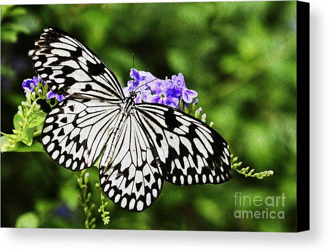 Butterfly Canvas Print featuring the photograph Common Mime by Pamela Gail Torres