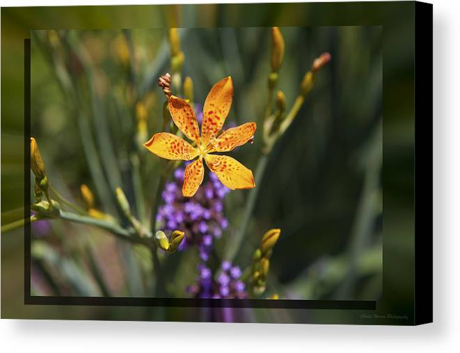 Flower Canvas Print featuring the photograph Day Lilly 46 by Charles Warren
