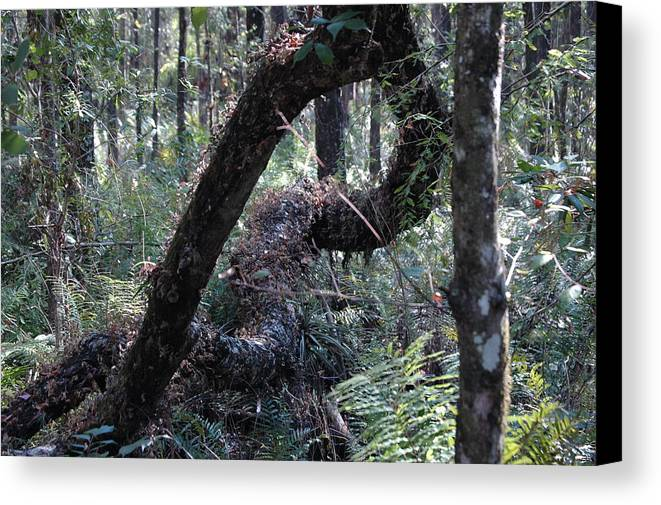 Decay Canvas Print featuring the photograph Decaying Tree by Susie Carr