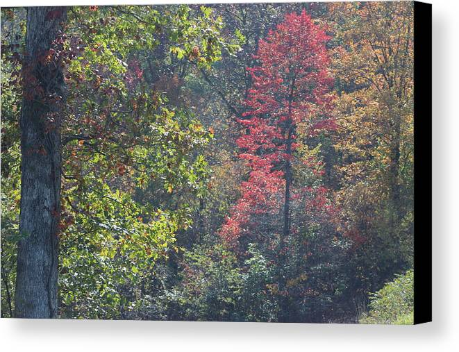 Autumn Color Canvas Print featuring the photograph Deep In The Wood by Charlene Gretsch