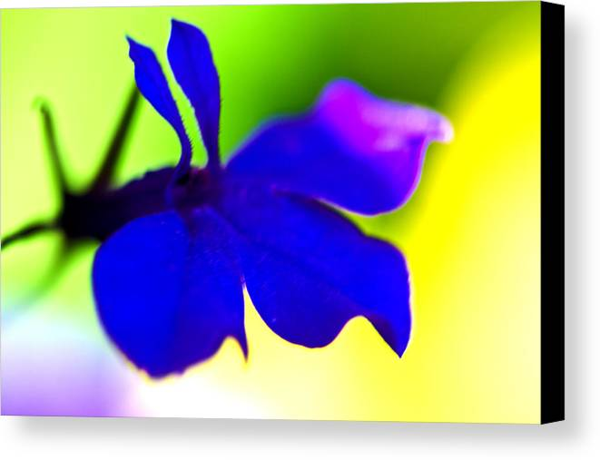 Blue Flower Canvas Print featuring the photograph Deeply Blue by Marie Jamieson