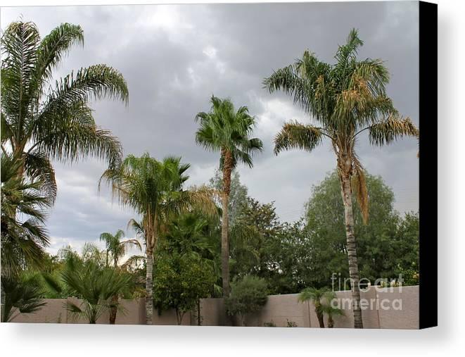 Rain Canvas Print featuring the photograph Desert Storm by Pamela Walrath
