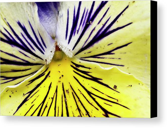 Horizontal Canvas Print featuring the photograph Dirty Pansy by Jennifer Smith