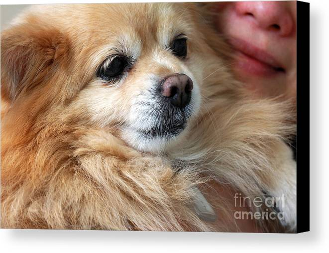 Dog Canvas Print featuring the photograph Dog First by Charline Xia