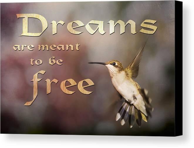 Hummingbird Canvas Print featuring the photograph Dreams by Gwen Vann-Horn