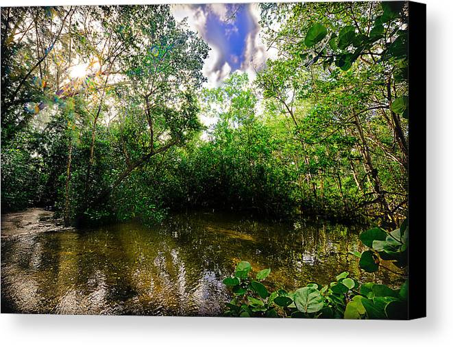 Inlet Canvas Print featuring the photograph Dubois Park Inlet by Michelle Armstrong